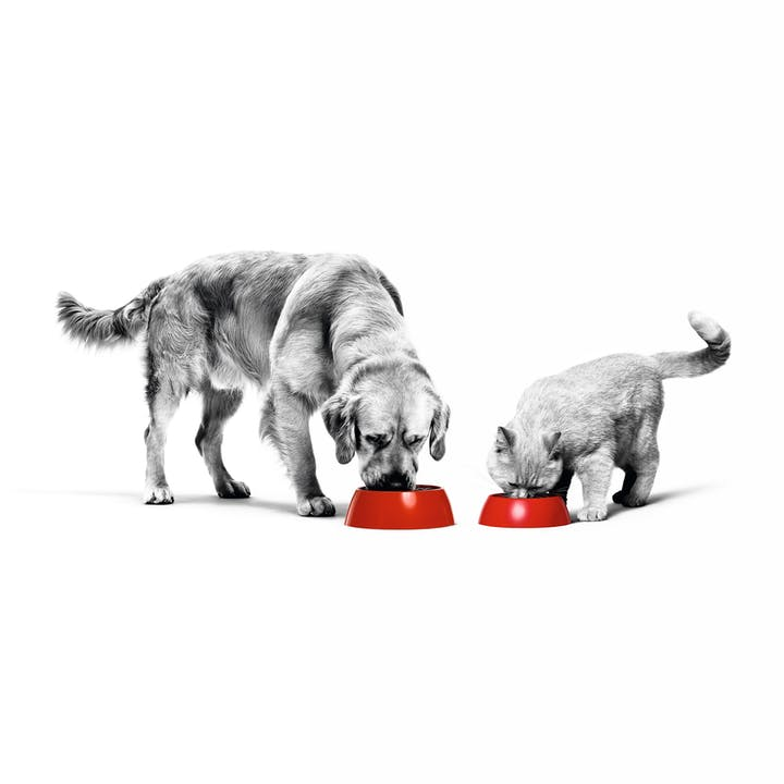 Royal-Canin-Pet-Food